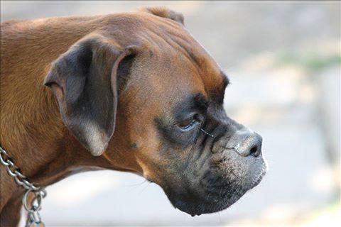 Dog Gone Jackson Hole